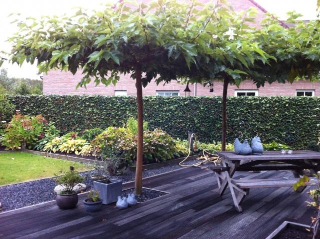 Dakbomen tuinplantencentrum de pauw for Schaduw een terras