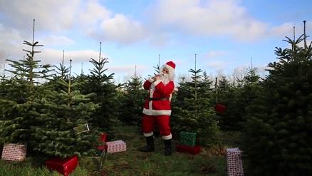 Kerstbomen Eigen Kweek Tuinplantencentrum De Pauw