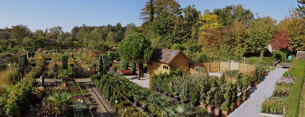 Meerstammige Bomen Tuinplantencentrum De Pauw